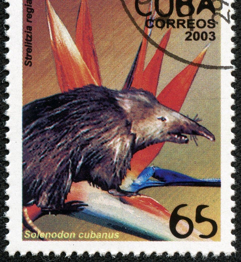 Kuba-Schlitzrüßler auf Briefmarke