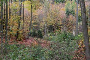 Lebensraum der Waldtiere