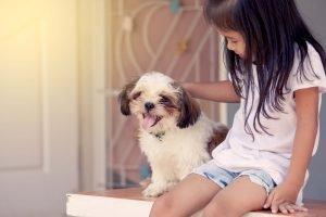 Kinder sind von einem süßen Shih Tzu meist begeistert. Mit seinem drolligen Wesen bezaubert er die ganze Familie.