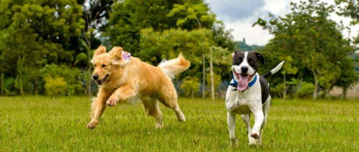 Nahrungsergänzungsmittel für Hunde: Wie sinnvoll und wichtig ist Futterzusatz?