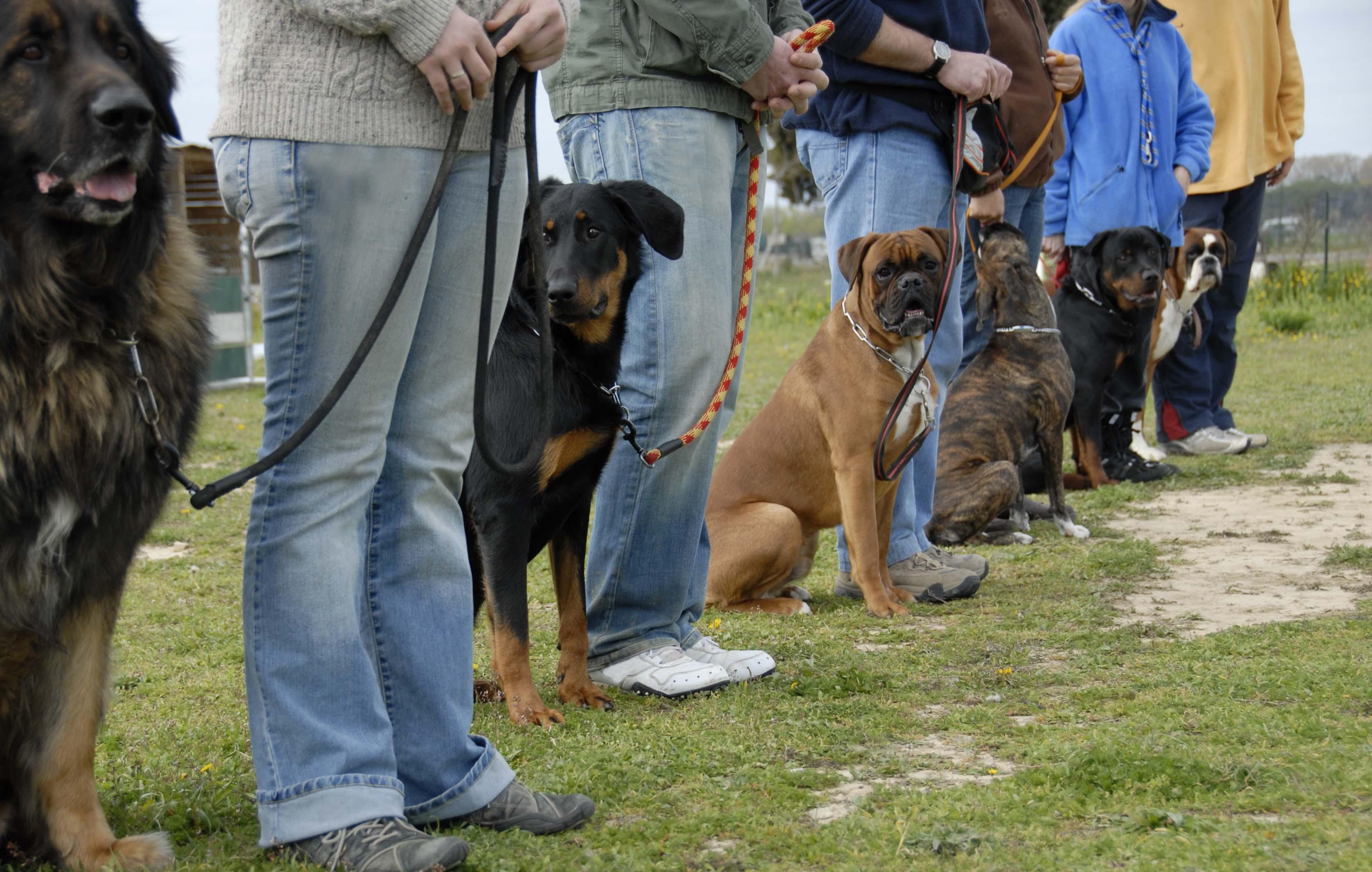 Obedience Hunde Herrchen