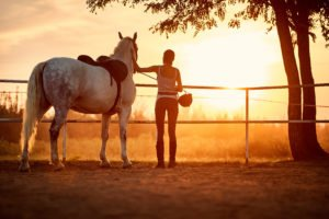 Pferd Sonnenuntergang