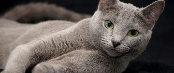 Russische Katzenrassen