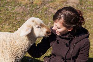 Schaf wird von Besitzerin gestreichelt