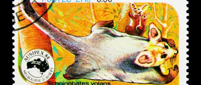 Riesengleitbeutler Briefmarke