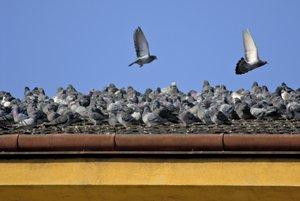 viele tauben auf einem dach