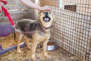 Hundehilfe: Freiwilliger geht mit Hund aus Tierheim spazieren