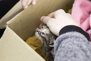Katze in Not wird beim Tierheim abgegeben