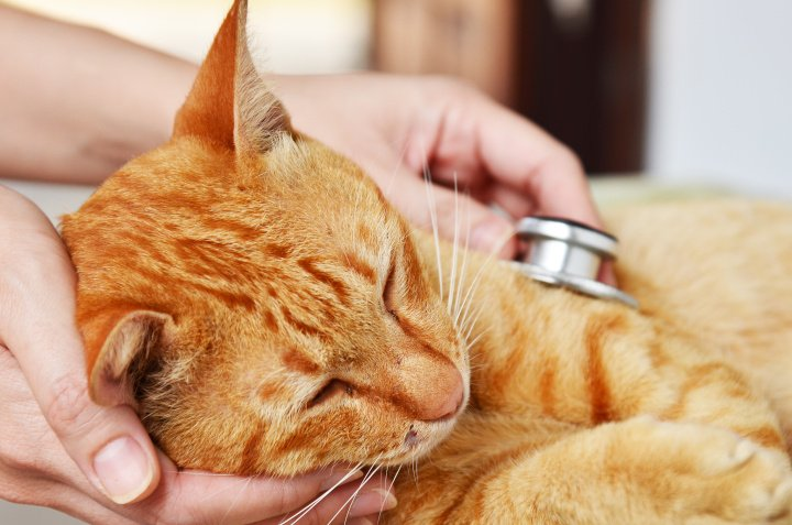 Tierkrankenversicherung für Hunde oder Katzen sinnvoll?