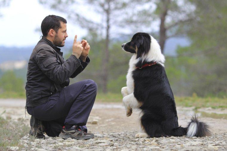 Verstehen Hunde unsere Sprache? Die Antwort ist klar: Nein.