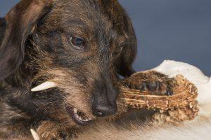 zanstein hund vorbeugen aufweichen